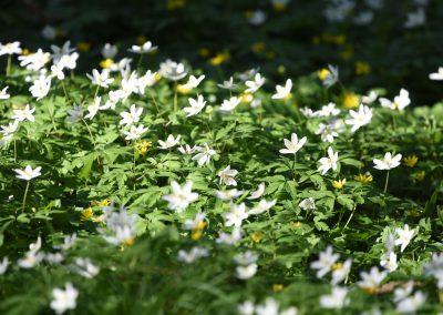 Jardins_fleurs1