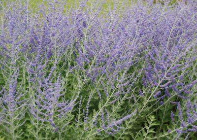 jardins_fleurs