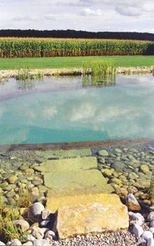 la piscine naturelle piscinenaturelle1